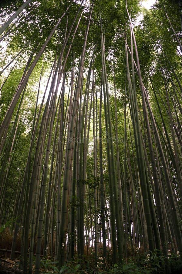 Japan, Kyoto, Arashiyama, mening van het bamboebos royalty-vrije stock foto