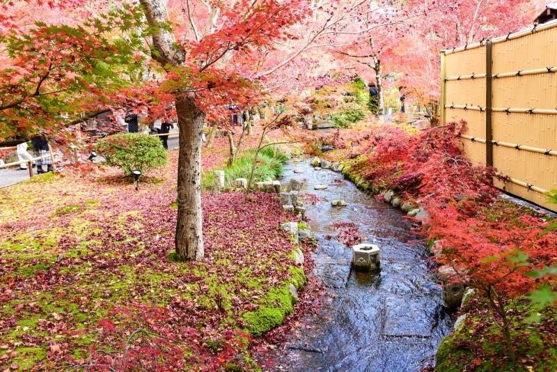 Japan röda lönnlöv i japanträdgården, Eikando tempel Kyoto royaltyfri bild