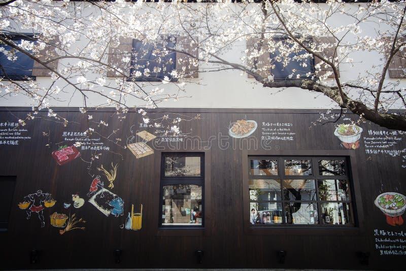 Japan säsong för körsbärsröda blomning i Kyoto i början av mars varje år, Japan royaltyfri bild
