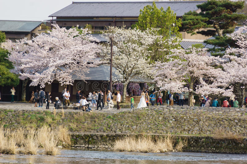 Japan`s cherry blossom season. This picture was taken in Arashiyama district in Kyoto Japan at springtime. Kyoto has so many nice places, specially at the cherry royalty free stock photography