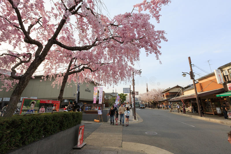 Japan`s cherry blossom season. This picture was taken in Arashiyama district in Kyoto Japan at springtime. Kyoto has so many nice places, specially at the cherry stock image