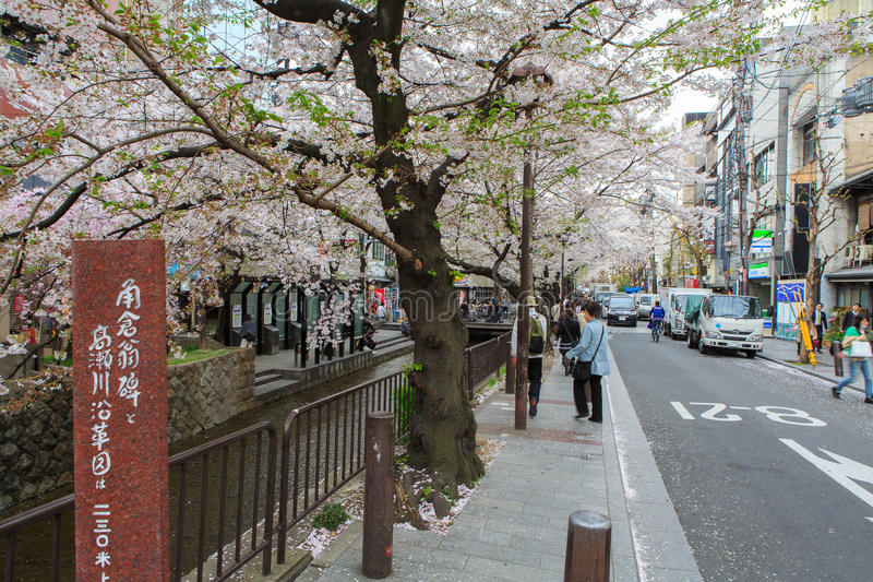 Japan`s cherry blossom season. This picture was taken in Pontocho, in Gion district, Kyoto Japan. Kyoto has so many nice places, specially at the cherry blossoms royalty free stock image