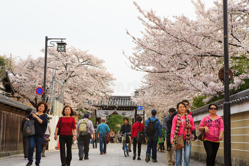 Japan`s cherry blossom season. This picture was taken in Pontocho, in Gion district, Kyoto Japan. Kyoto has so many nice places, specially at the cherry blossoms stock images