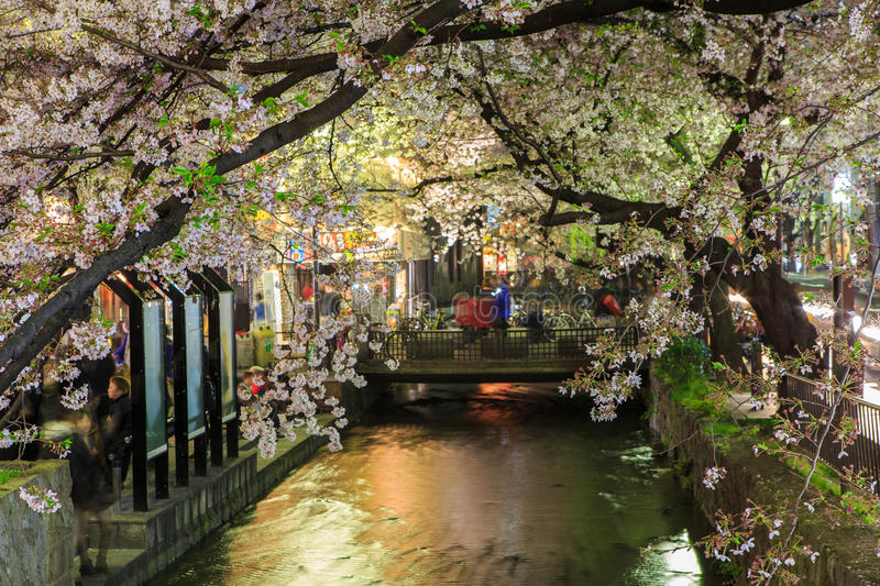 Japan`s cherry blossom season. This picture was taken in Pontocho, in Gion district, Kyoto Japan. Kyoto has so many nice places, specially at the cherry blossoms royalty free stock images