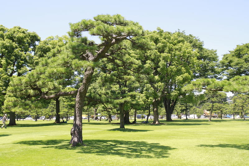 Download Japan's Imperial Palace Lawn Outside The Court Stock Photo - Image: 27802974