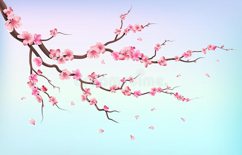Japan sakura branches with cherry blossom flowers and falling petals isolated on white background vector illustration vector illustration