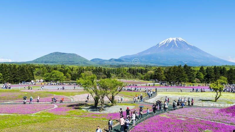 Japan Shibazakura festival med fältet av rosa mossa av Sakura arkivbilder