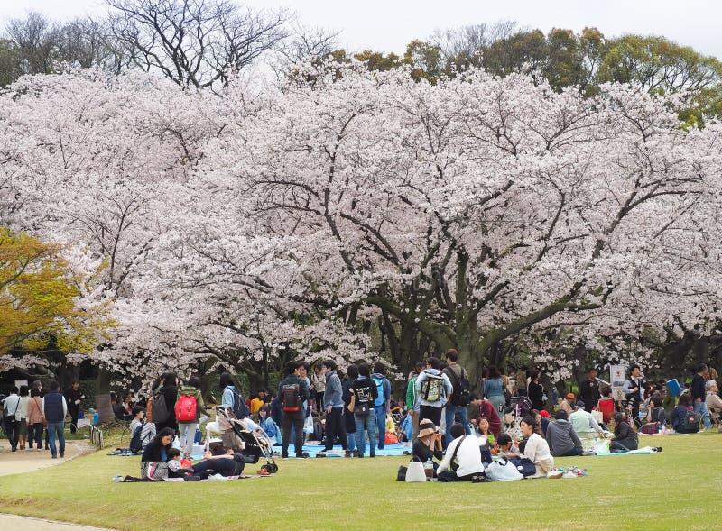 Japan som tycker om festival för körsbärsröda blomningar parkerar in royaltyfria bilder