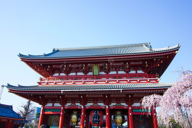 Japan tempel av dyrkan, buddistisk gränsmärke för den shinto religionen, träd för körsbärsröd blomning royaltyfri bild