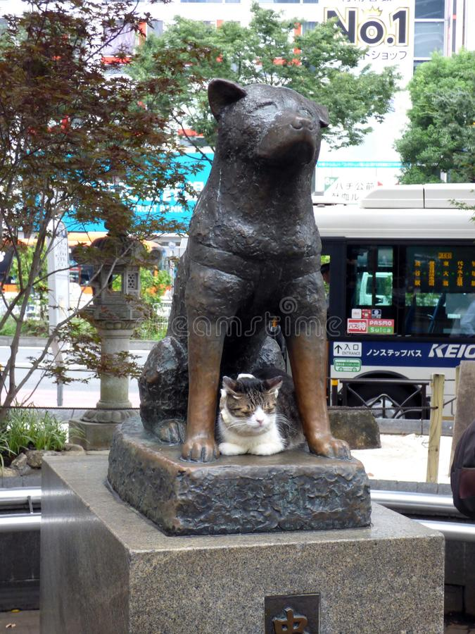 JAPAN. Tokyo. Shibuya district. Statue of the dog Hachiko. In 1923, Hachiko, an Akita dog, accompanies his master to the train station every morning. But on stock image