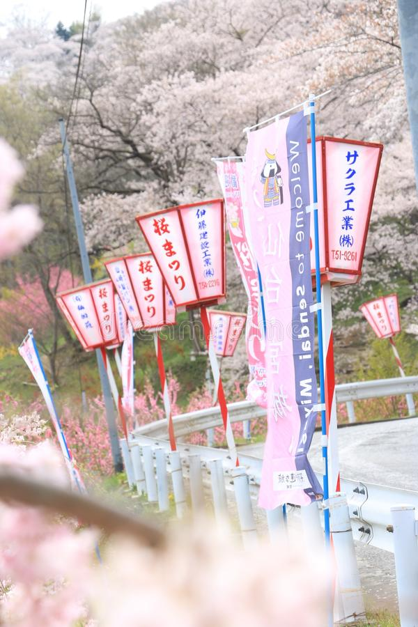 Japan vår royaltyfri foto