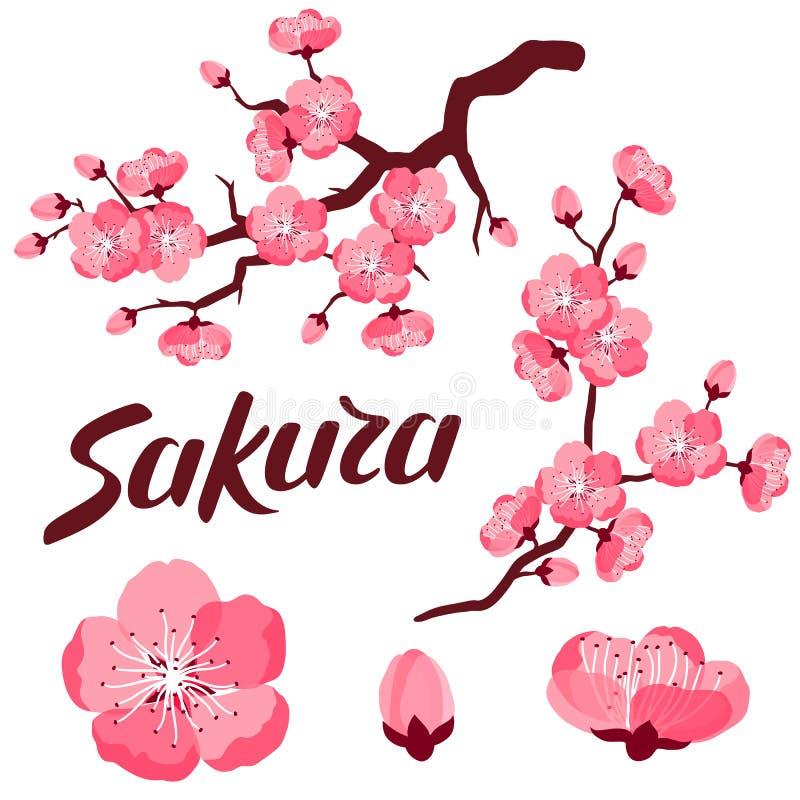 Japanerkirschblüte-Satz Niederlassungen und stilisierte Blumen Gegenstände für Dekoration, Design auf Werbungsbroschüren, Fahnen lizenzfreie abbildung
