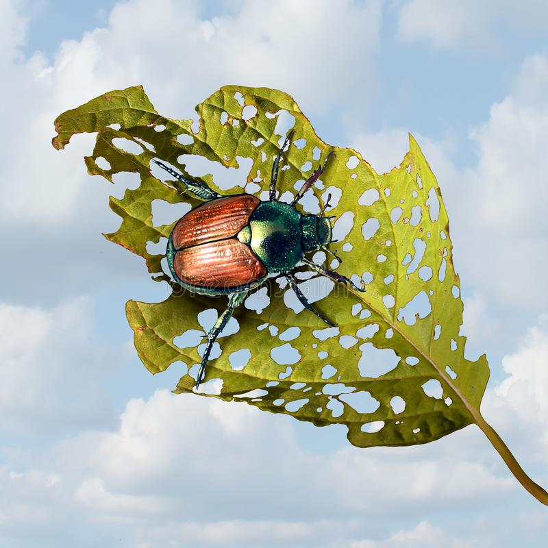 Japanese Beetle Damage. As an infestation of an invasive species insect causing damaged plant and agriculture problems or garden vegetables pests in a 3D stock illustration