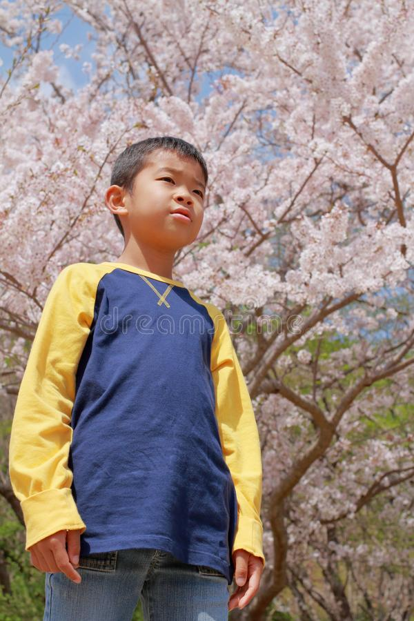 Japanese boy and cherry blossoms stock photos