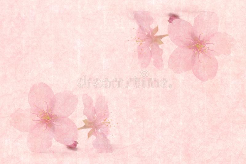 Download Japanese Cherry Blossom On Pink Vintage Paper Background Stock Photo - Image of ornate, april: 105836652