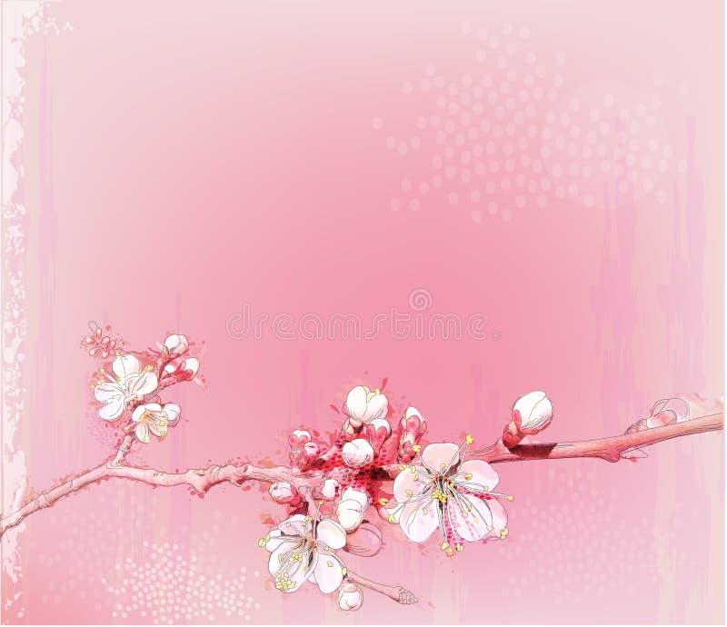 Japanese cherry blossoms royalty free illustration