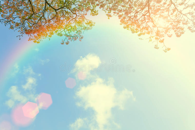 Japanese cherry flower and rainbow in blue sky with cloud. Beaut. Iful nature background royalty free stock images