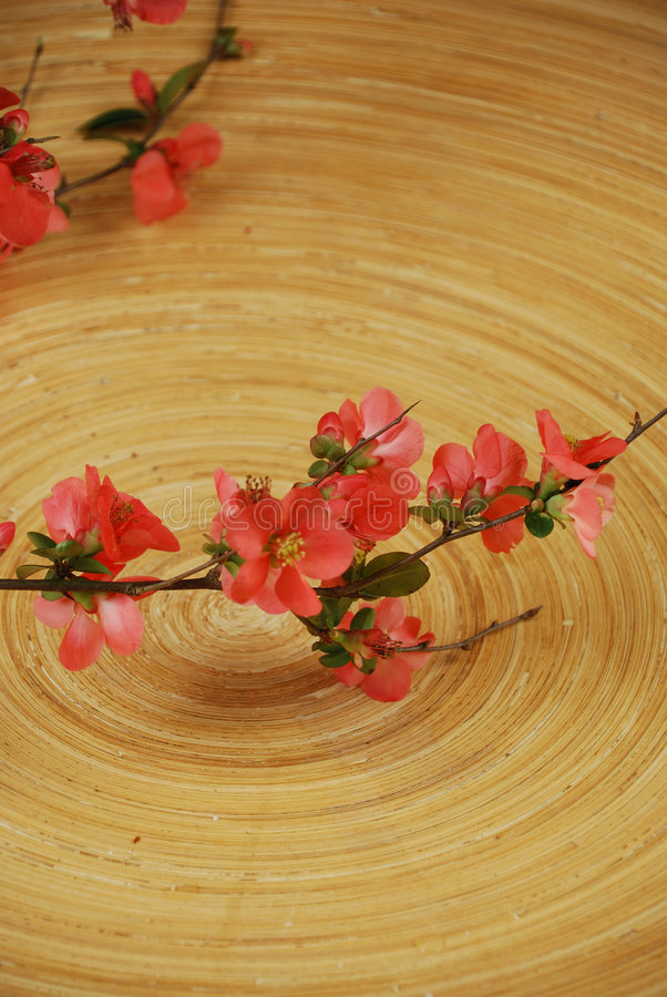 Free Japanese Cherry Tree Branch Stock Photography - 4471252
