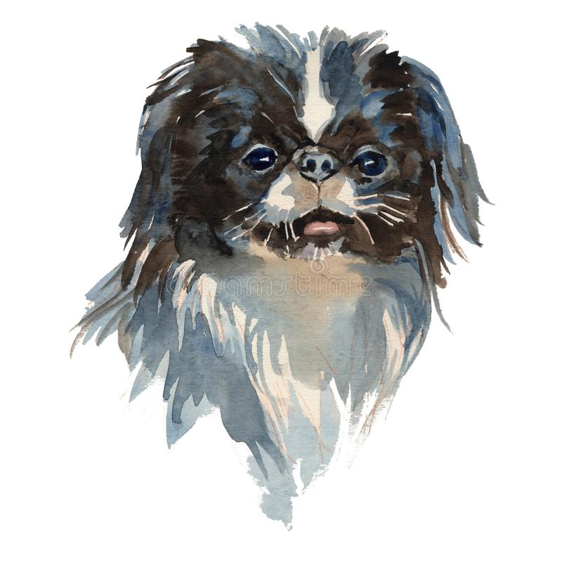 The Japanese Chin portrait. Japanese Chin - hand painted, isolated on white background watercolor dog portrait vector illustration