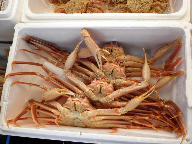 Japanese crabs stock photography