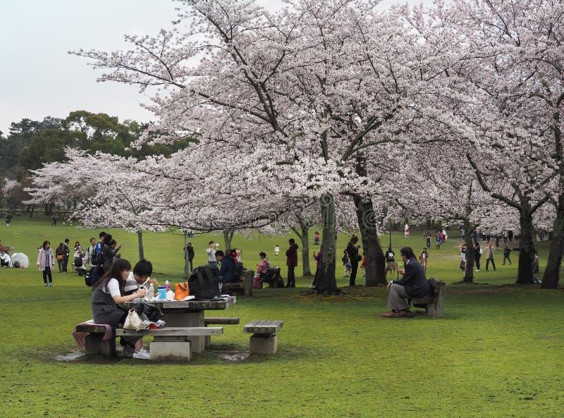 Japanese enjoying Cherry blossoms festival in park stock photo