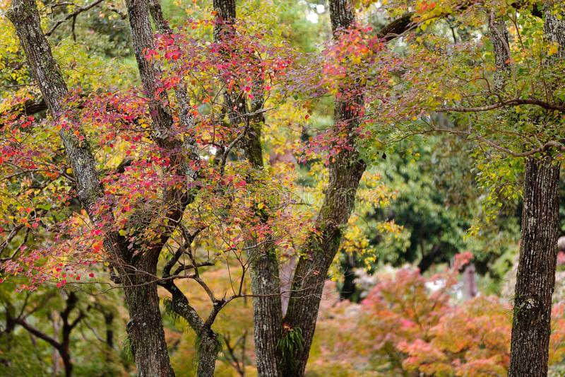 Download Japanese fall colors stock photo. Image of park, nara - 26225286