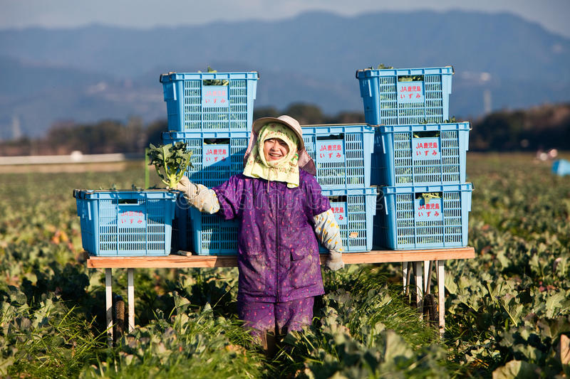 Japanese female farmer in a broccoli field stock photos