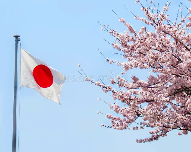 Japanese flag, cherry blossoms royalty free stock photo