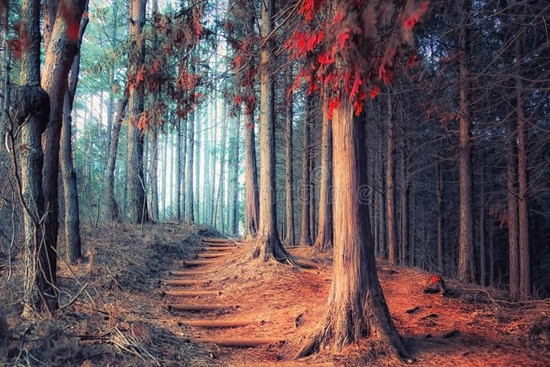 Japanese forest in autumn stock images
