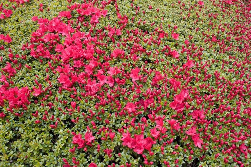 Japanese Garden stock photos