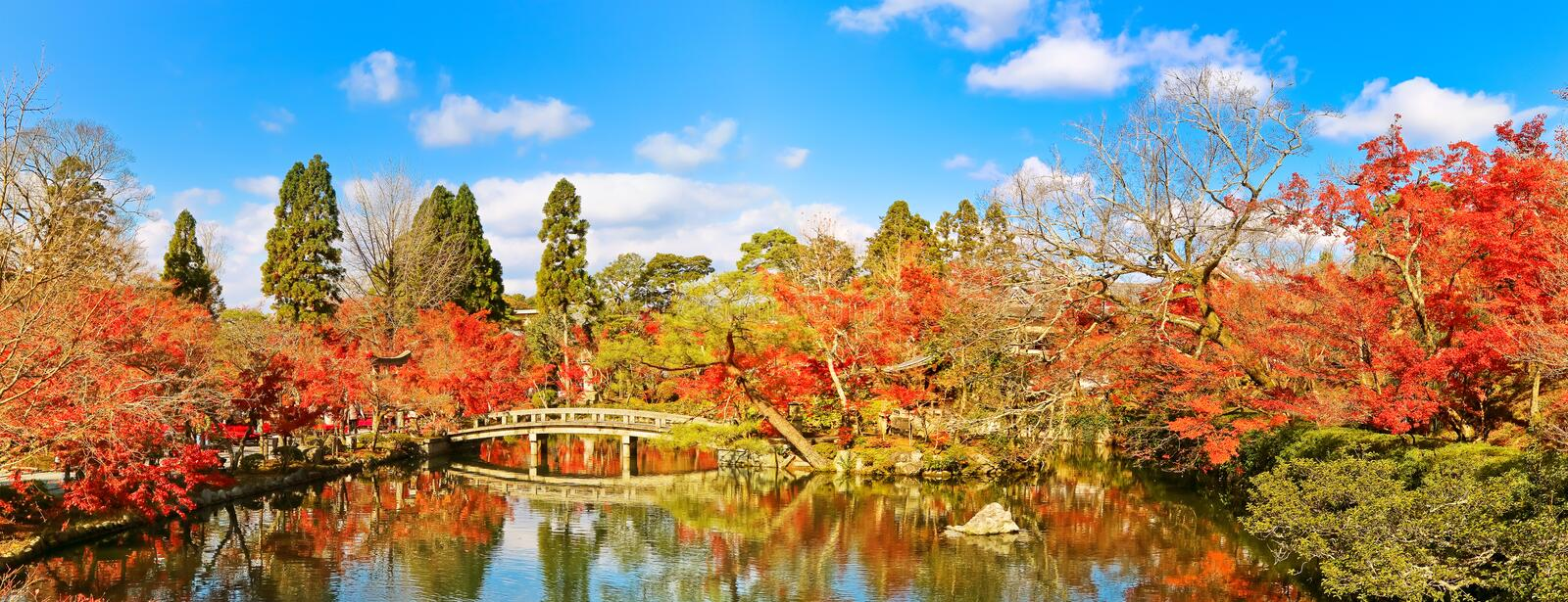 Japanese garden in autumn in Kyoto, Japan. royalty free stock photography
