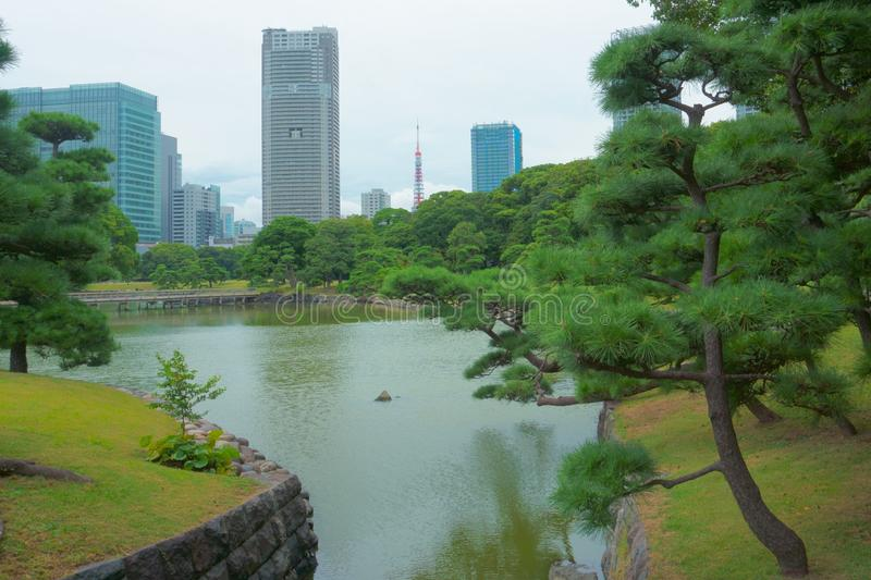 Japanese garden on the background of modern buildings. Hamarikyu gardens royalty free stock photos