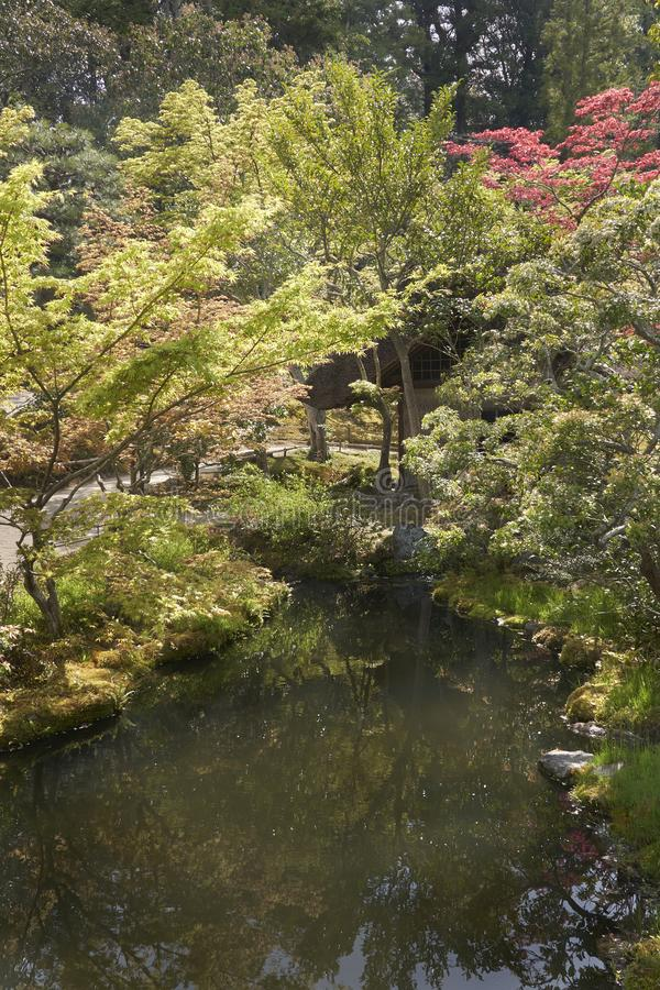 Japanese garden with a backlit trees and a tranquil river in foreground. stock photo