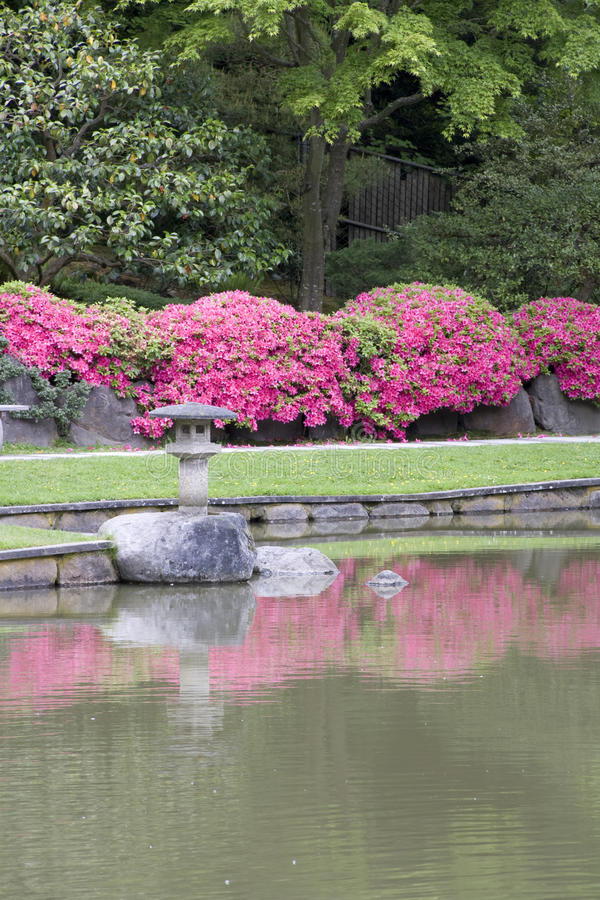 Download Japanese garden stock photo. Image of pink, japanese - 31480086