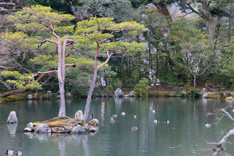 Japanese garden at famous Kinkakuji stock photo