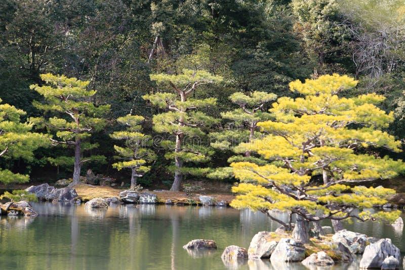 Japanese garden at famous Kinkakuji stock image