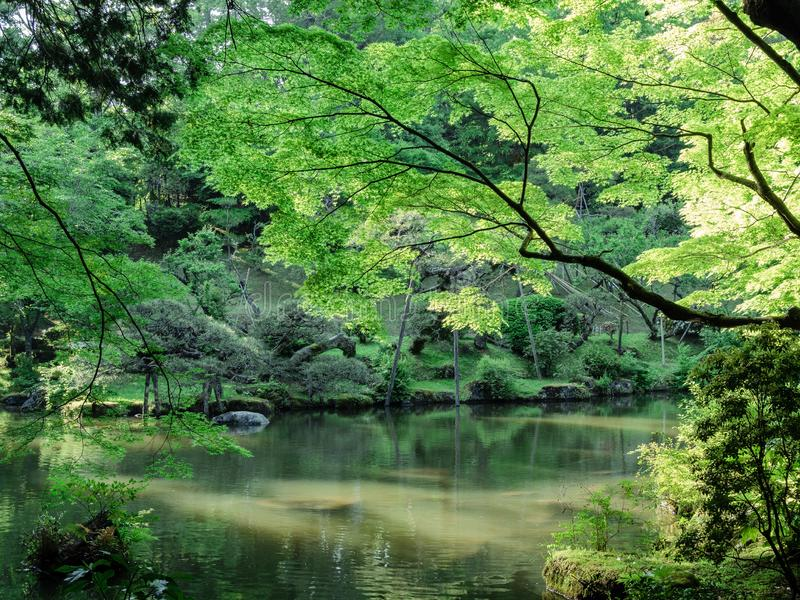 Japanese garden full of green-leaf trees royalty free stock photo