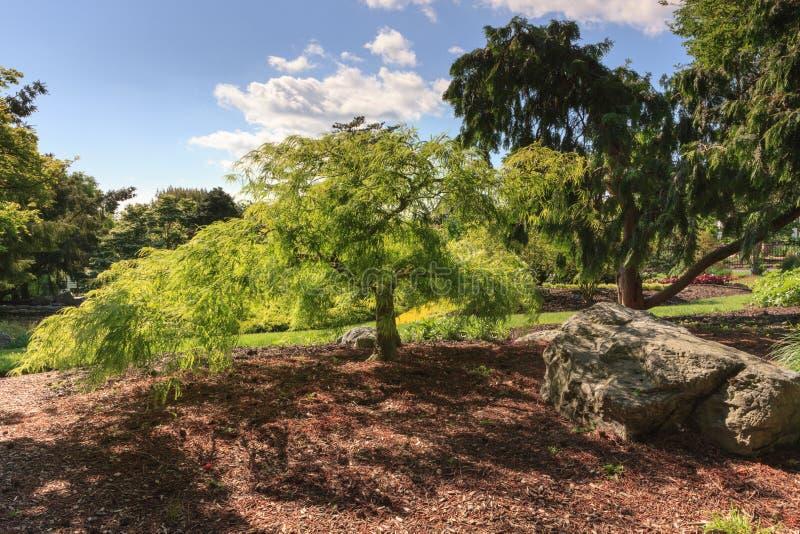 Japanese Garden Hershey Pennsylvania. Landscape of a threadleaf Japanese Maple tree in Hershey Gardens in Pennsylvania royalty free stock photos