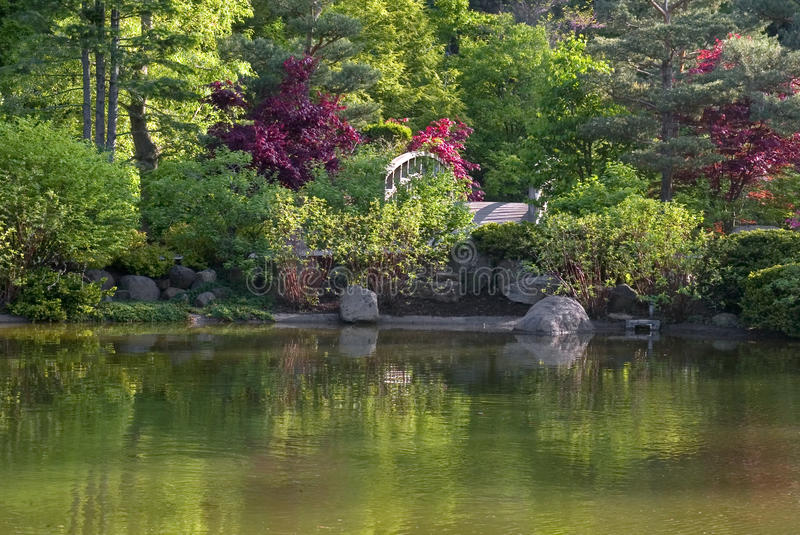 Download Japanese garden pond stock photo. Image of bridge, pond - 22795400