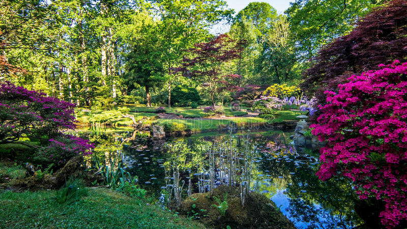 Japanese garden pond lined with bright purple and pink branches. Bright sun rays and fresh spring colored trees all reflected in the water of the pond royalty free stock photos