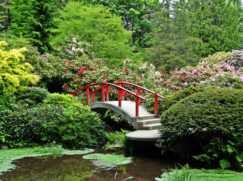 Japanese Garden Red Bridge Flower Bushes stock photos