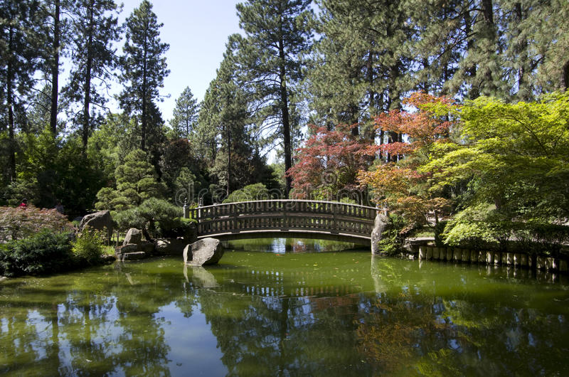 Japanese garden Spokane royalty free stock image