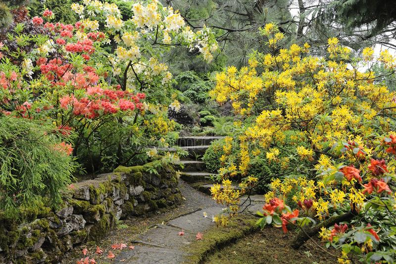 Japanese garden in summer with stone path. Japanese garden in summer with stone pat and blooming flowers royalty free stock image