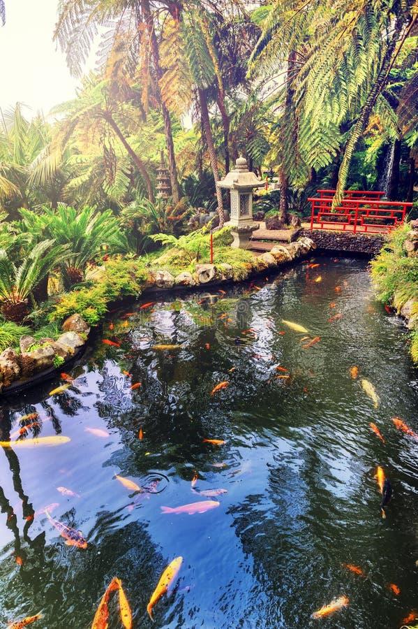 Free Japanese Garden With Swimming Koi Fishes Stock Photos - 61190263
