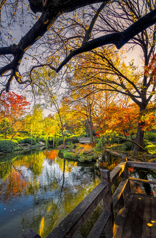 Japanese Gardens Pond. Fall foliage captured in late afternoon sunshine royalty free stock photography