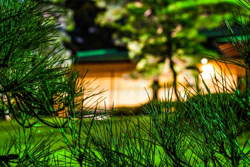 Japanese house and pine royalty free stock images