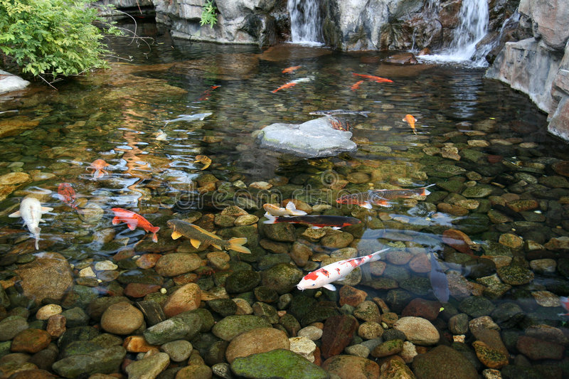 Japanese koi fish pond stock photo image of stones for Koi pond photos