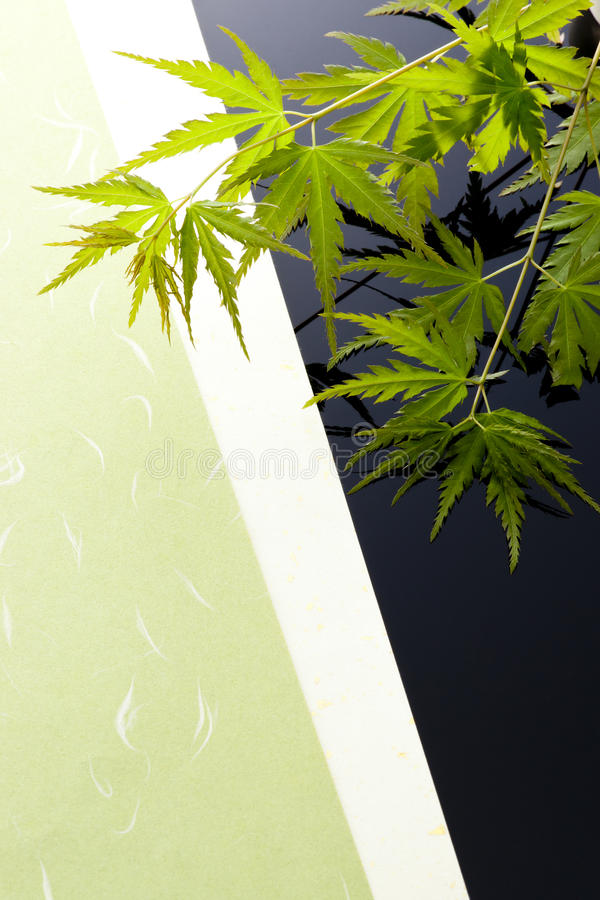 Download Japanese maple leaves stock photo. Image of maple, sunny - 26096722