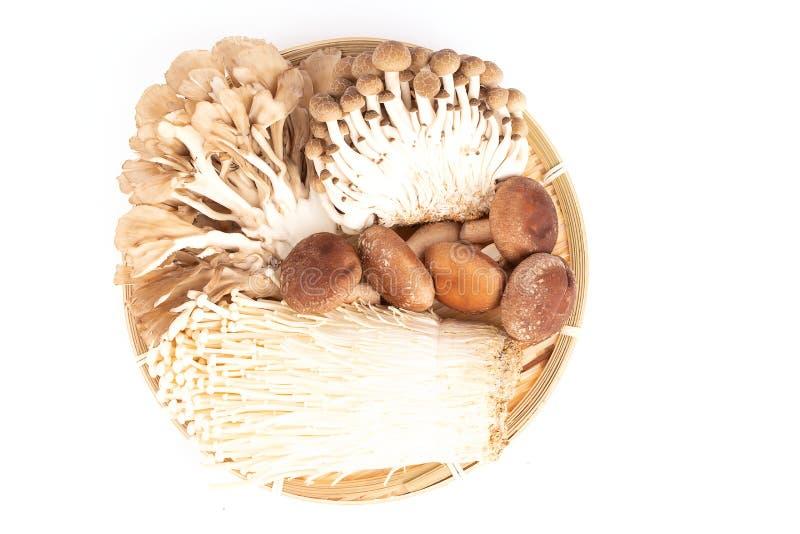 Japanese mushrooms on white royalty free stock photos