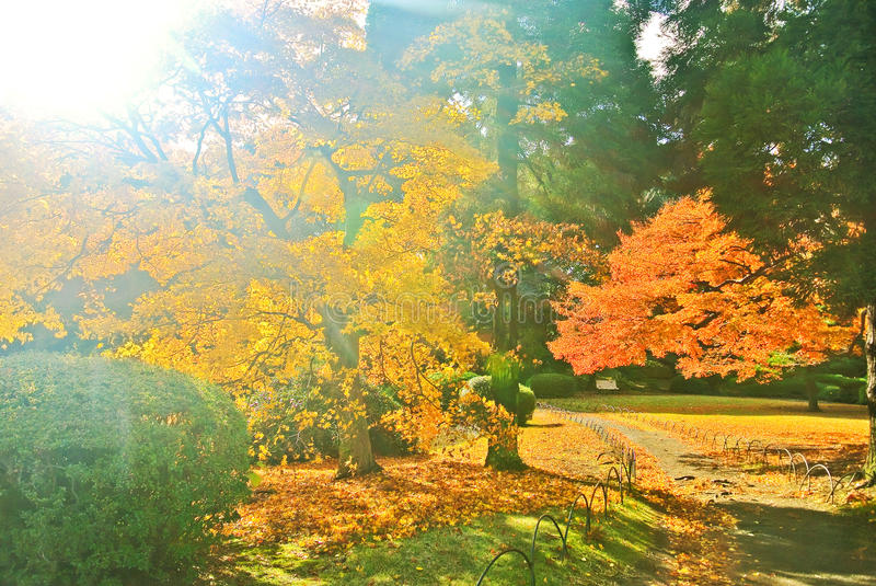 Japanese park in autumn in Tokyo, Japan. royalty free stock photography